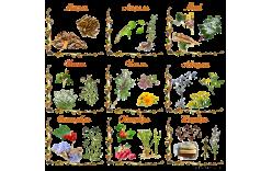 Сбор лекарственных растений по правилам