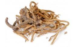 Валериана: описание, история применения и свойства корней