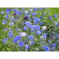 Василек синий (трава) купить в Украине. Заказать Василек синий (трава) по интернету. Где купить Василек синий (трава)?